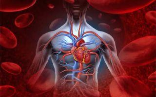 Причины и признаки внутреннего кровотечения — диагностика внутреннего кровотечения