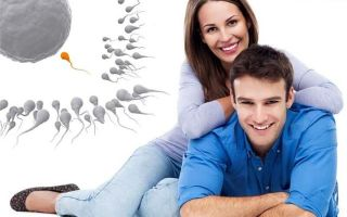Спермограмма – процесс сдачи анализа и расшифровка результатов у мужчин