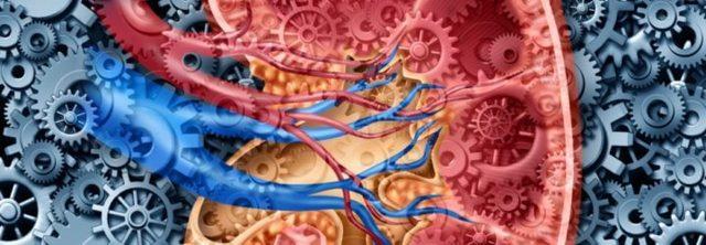 Причины хронической почечной недостаточности – симптомы и диагностика ХПН