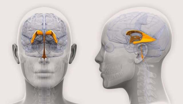 Современные методы лечения гидроцефалии – последствия водянки головного мозга
