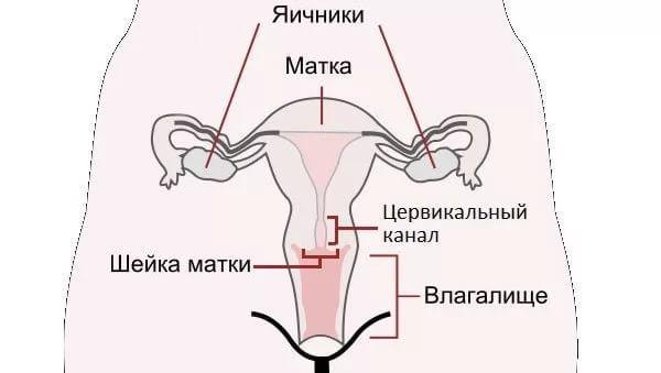 Бужирование цервикального канала шейки матки - показания, процедура, результат