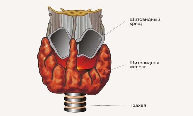Лазерная деструкция узлов щитовидной железы – показания к операции и особенности её выполнения