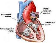 Восстановление клапанов сердца – современные виды клапаносохраняющих операций
