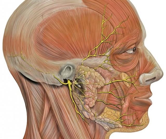 Причины пареза лицевого нерва – симптомы пареза тройничного нерва у взрослых и детей