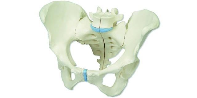 Ситуации, при которых возможен перелом крестца – виды и симптомы крестцового перелома