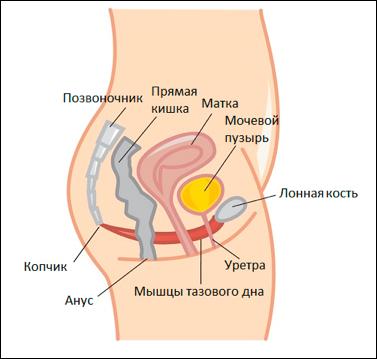 Лечение опущения и выпадения матки и влагалища – с операцией и без