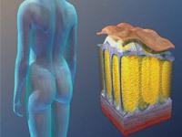 Сиафлекс от целлюлита - результаты испытаний препарата для лечения целлюлита прошли успешно
