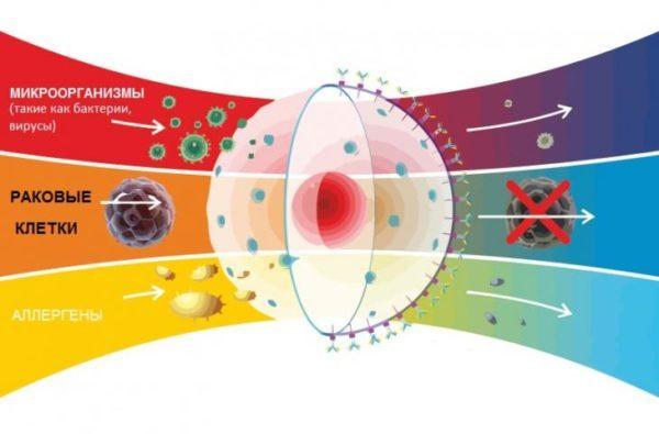 Гипертермия – эффективно ли воздействие высокой температуры на опухоль?