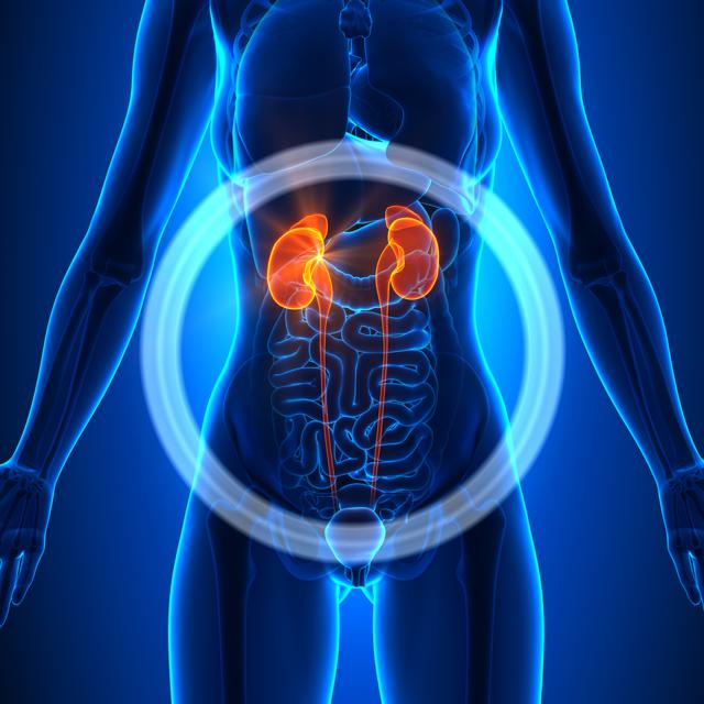 Пиелонефрит – клиническая картина, диагностика и лечение